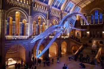 おすすめ! ロンドンで絶対行きたい自然史博物館